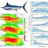 Modelling the impacts of environmental variation on the distribution of blue marlin, Makaira nigricans, in the Pacific Ocean