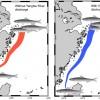 長江大壩截流對東海鯷魚產卵洄游可能有負面影響