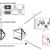 嶄新的時間序列分析方法發現,生物種類間動態交互作用網絡對生態系統穩定性有關鍵影響