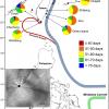 琉球群島、臺灣與菲律賓海域小鰭鰭尾鯙之幼生漂浮期、初期成長率與族群遺傳結構之探討