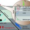 陸域泥火山攜帶深部流體和氣體可造成急劇的氧化還原梯度和生地化循環
