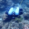 台灣中光層珊瑚生態系探索