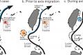 單渦旋、雙渦旋、上游擾動影響臺灣東邊黑潮變動的動力機制