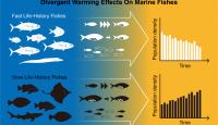 預測印度、太平洋魚種在海水暖化下的數量趨勢