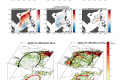 Impact of ENSO on the South China Sea during ENSO decaying periods (a new mesoscale perspective from the regional coupled model)