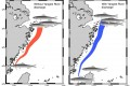 """<!--:tw-->""""Damned"""" Yangtze River Dam may affect the spawning migration of anchovy in the East China Sea<!--:-->"""