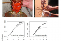 <!--:tw-->Modelling the growth of crustacean species<!--:-->