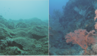 Acknowledging differences: number, characteristics, and distribution of marine benthic communities along Taiwan coast
